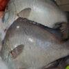 Cá Kẽm Phú Quốc