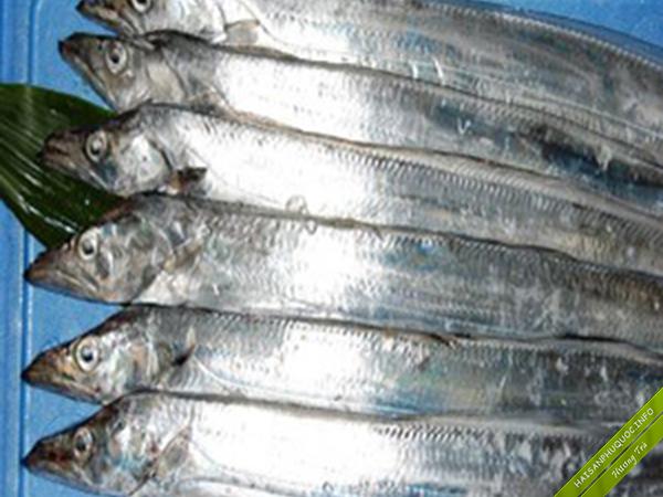 Cá Hố tại vùng biển Phú Quốc