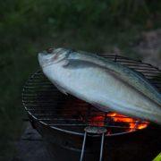 Cá Hiếu nướng, cuốn rau sống, ăn kèm nước chấm