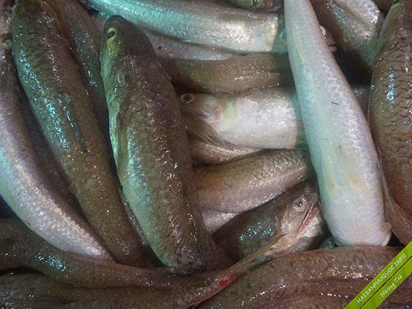 Cá mối hải sản Phú Quốc