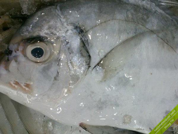 Cá bè lão Phú Quốc