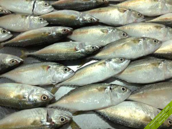 Cá Ba thú giá bìn hdân phù hợp quán cơm