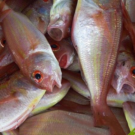 Cá đổng Phú Quốc tươi, thịt ngon ngọt