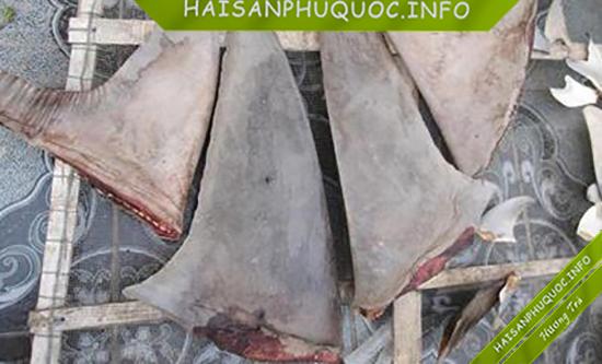 Vi cá mập biển Phú Quốc