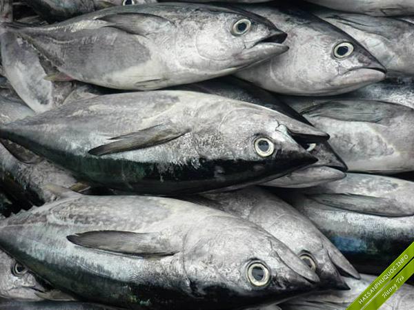 Cá ngừ Phú Quốc