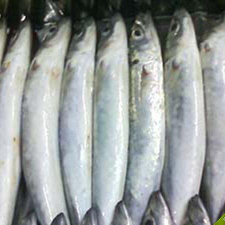 Đặt mua Cá nục tươi từ Phú Quốc