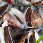 Ốc vôi Phú Quốc chất lượng sống