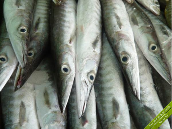 Cá Nhòng Phú Quốc