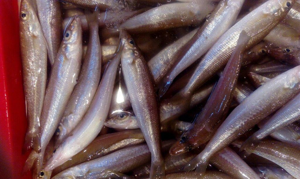 Cung cấp hải sản đang dạng các loại từ cá, tôm, cua đến mực, ốc và các loại sò