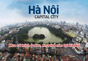 Mua cá trích ở đâu tại Hà Nội?