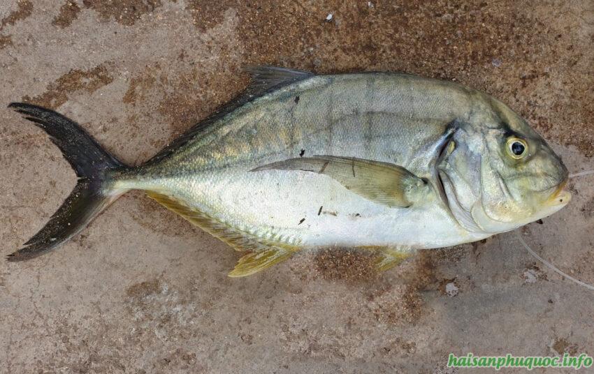 Cá Bè Đưng tại Phú Quốc