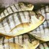 Cá Bè đưng được đánh bắt thành đàn
